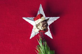 cat christmas tree topper
