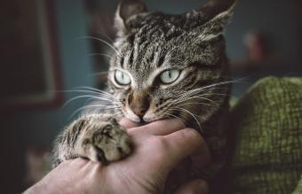 First Aid for an Infected Cat Scratch