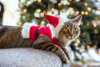 Cat Wearing Santa Hat While Lying On Sofa
