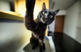 Cat touching the camera