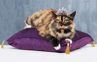 Cat posing with a tiara