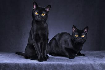 Two Black cats sitting together