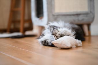 Cat with catnip sachet