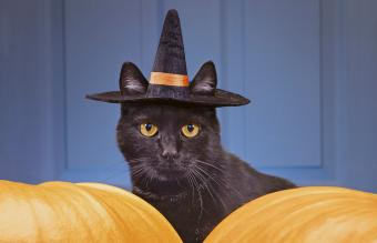 Black cat wearing witch's hat