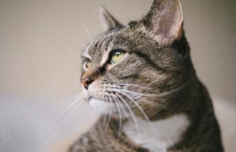 124 Timeless Tabby Cat Names