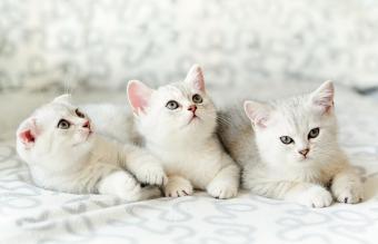 160 Modern Unisex Cat Names
