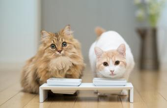 Two cats with milk