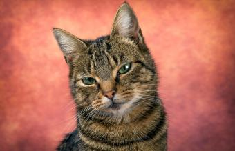 150+ Epic Male Cat Names