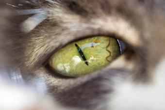 Can Cats See Color? A Peek Into Feline Vision