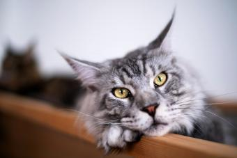 150+ Roman Cat Names With Strength & Style