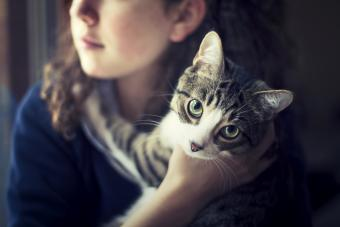 Cat in the arms of a girl looking at camera