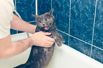 Why Do Most Cats Hate Water? 7 Curious Facts