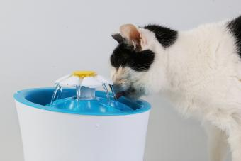 Cat drinking from a pet water fountain