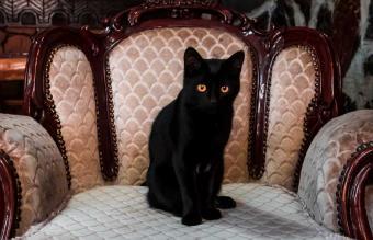 pluto black cat edgar allan poe