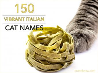Cat paw touches Italian spinach tagliatelle