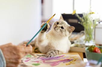 Cute cat reaching paintbrush held by senior man at home