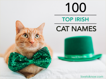 Cat for St Patrick's Day