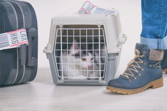 Cat in a carrier at airport