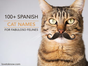 Cute tabby cat with moustache