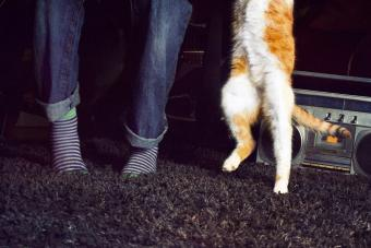 Person and a ginger cat dancing to the music