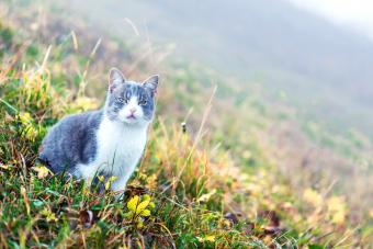 Cat on green meadow on a foggy day