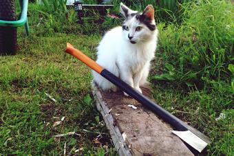 Cat Sitting By Axe In Yard