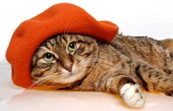 Cat with orange beret