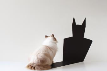Cat looking at bat shadow