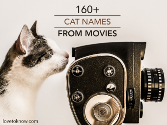 White and gray cat looking into viewfinder of vintage camera