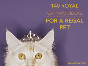 Royal Cat Name Ideas for a Regal Pet