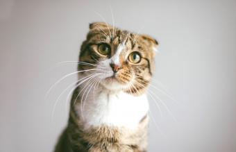 What Is a Tabby Cat? Background and Fun Facts