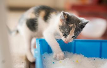 How Often to Change Cat Litter: Quick Guide by Type