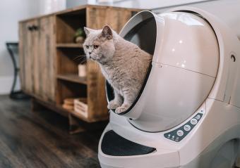Litter-Robot Cat Litter Box