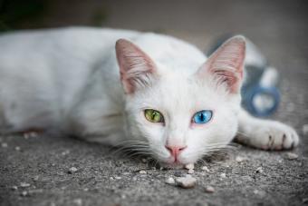 100+ Exotic Cat Names for Distinctive Pets