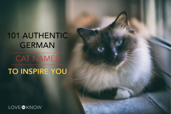 101 Authentic German cat names