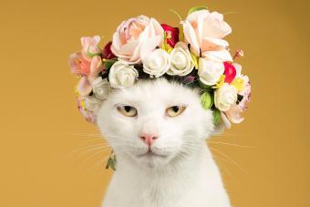 115 Latin Names for Cats: Fun & Classical Ideas