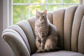 200+ Elegant Cat Names for Sophisticated Felines