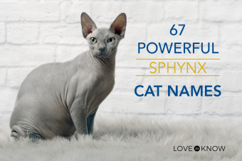 Powerful Sphynx Cat Names