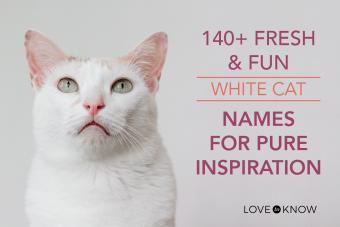 Fresh & Fun White Cat Names for Pure Inspiration