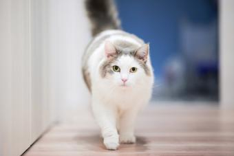 White and Gray Cat