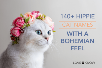 Hippie Cat Names With a Bohemian Feel