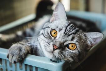100+ Memorable Cat Names That Begin With M