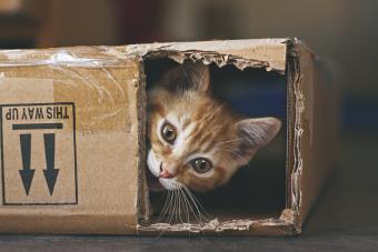 Cute cat in box