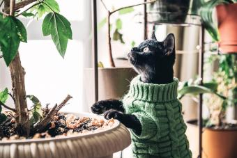 66 Plants That Are Poisonous to Cats