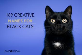 Black cat on blue background