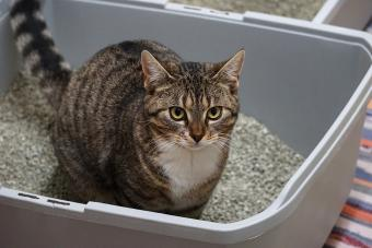 a small beautiful cat is sitting in the litter box
