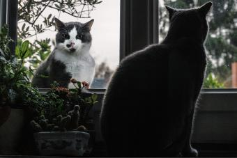 Cats at Window