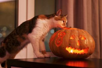 Cat Looking At Illuminated Jack O Lantern