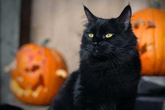 Must-Know Halloween Safety for Pets, Black Cats & Creatures