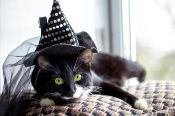 Black Cat With Witch Hat For Halloween